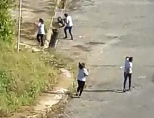Enxame de abelhas ataca trabalhadores na Pituba